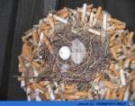 Komisches-Nest.jpg auf www.funpot.net
