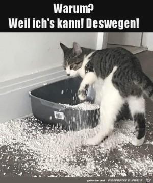Ich-kann-das-halt-als-Katze.jpg auf www.funpot.net