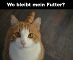Wo-bleibt-mein-Futter.png auf www.funpot.net