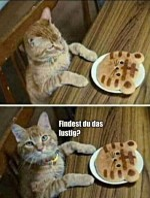Katze-sieht-Katzenkeks.jpg auf www.funpot.net
