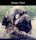 Katzen-Tetris.jpg auf www.funpot.net