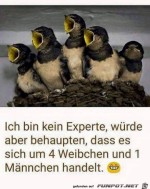 Kein-Experte.jpg auf www.funpot.net