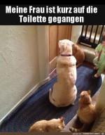 Frauchen-ist-kurz-auf-der-Toilette.jpg auf www.funpot.net
