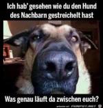 Anderen-Hund-gestreichelt.jpg auf www.funpot.net