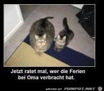 Wer-war-bei-Oma.jpg auf www.funpot.net