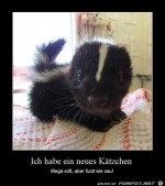 neues-Kätzchen.jpg auf www.funpot.net