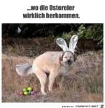 Da-kommen-die-Eier-wirklich-her.jpg auf www.funpot.net