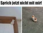 Kätzchen-ist-beleidigt.jpg auf www.funpot.net
