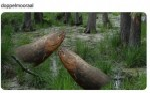 Doppelmooraal.jpg auf www.funpot.net