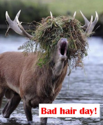 Bad-hair-day.png auf www.funpot.net