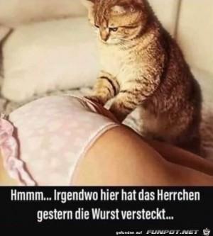 Wo-hat-das-Herrchen-die-Wurst-versteckt?.jpg auf www.funpot.net