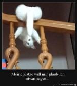 Katze-verrenkt-sich.jpg auf www.funpot.net