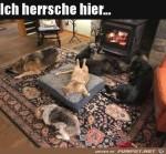 Katze-ist-der-Chef.jpg auf www.funpot.net
