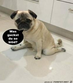 Was-guckst-du-so-blöd?.jpg auf www.funpot.net