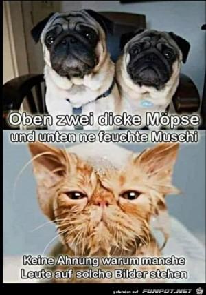 Möpse-und-Muschi.jpg auf www.funpot.net