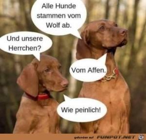 Alle-Hunde-stammen-vom-Wolf-ab.jpg auf www.funpot.net