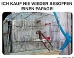 Super-Papagei.jpg auf www.funpot.net