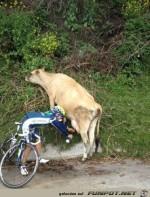 Schnappschuss-von-der-Tour-de-France.jpg auf www.funpot.net