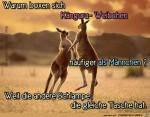Warum-boxen-Kaenguru-Weibchen.jpg auf www.funpot.net
