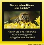 warum-haben-Bienen-eine-koenigin.jpg auf www.funpot.net