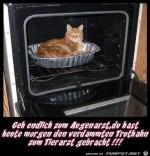 Falsches-Tier-zum-Arzt-gefahren.jpg auf www.funpot.net