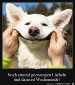 Gezwungen-lächeln.jpg auf www.funpot.net
