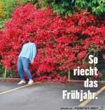 Der-Frühling.jpg auf www.funpot.net
