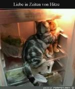 Katzen-im-Kühlschrank.jpg auf www.funpot.net