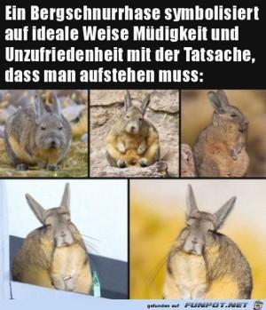 Müder-Hase.jpg auf www.funpot.net