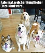 Einer-wäre-lieber-ein-Einzelhund.jpg auf www.funpot.net