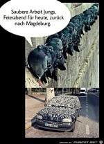Tauben-haben-gute-Arbeit-geleistet.jpg auf www.funpot.net