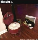 So-sind-die-Katzen.jpg auf www.funpot.net