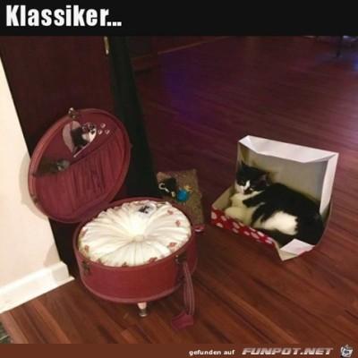 So-sind-die-Katzen.jpg von Alina