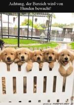 Niedliche-Hunde-bewachen-den-Garten.jpg auf www.funpot.net