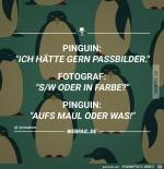 Pinguin.jpg auf www.funpot.net