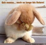 So-lange-bis-Ostern.png auf www.funpot.net