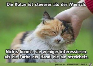 Clevere-Katze.jpg auf www.funpot.net