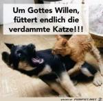 gebt-der-Katze-was-zum-Fressen.jpg auf www.funpot.net
