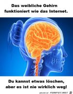 Das-weibliche-Gehirn.png auf www.funpot.net