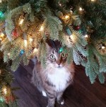 Baum-Katze.jpg auf www.funpot.net
