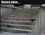 So-sind-Katzen-eben.jpg auf www.funpot.net