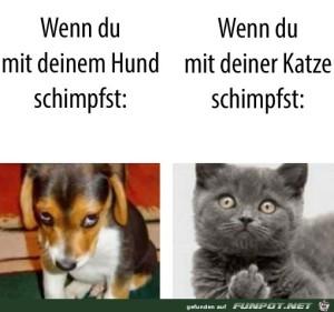 Mit-Hund-und-Katze-schimpfen.jpg auf www.funpot.net