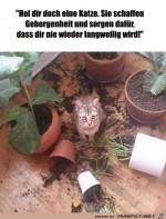 Mit-einer-Katze-wird-es-nie-langweilig.jpg auf www.funpot.net