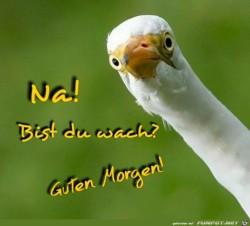 Na!-Bist-du-wach-?-Guten-Morgen-!.jpg auf www.funpot.net