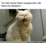 Allergische-Katze.jpg auf www.funpot.net