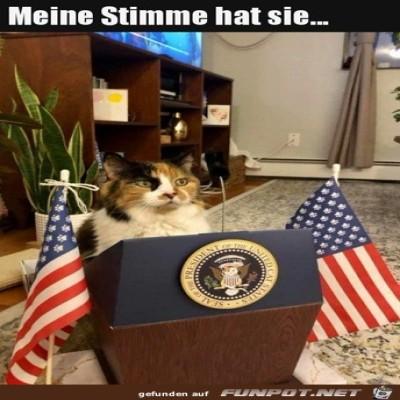 Eine-Katze-als-Präsident.jpg von Damon