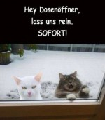 Katzen-wollen-ins-Haus.jpg auf www.funpot.net