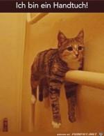 Handtuch-Katze.jpg auf www.funpot.net