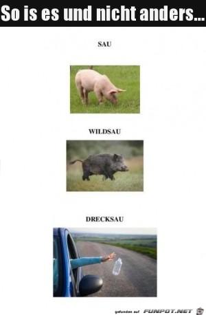 Die-unterschiedlichen-Schweine.jpg auf www.funpot.net