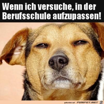 Cooler-Hundeblick.jpg von Rubia